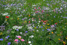 Meadow Full Of A Variety Of Wi...