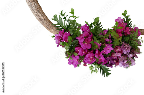 Tropical leaves and purple vanda orchid flowers, floral arrangement on tree twig isolated on white background, clipping path included.