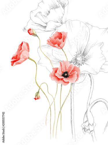rysunek akwarelowy maku, grafiki i koloru, przetwarzany w programie