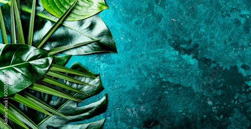 Creative tropical leaves background. Trandy tropical leaves on turquoise slate background - color of the year 2018. Top view, copy space