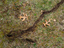 Vole Lawn Spring Damage