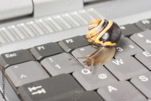 Photo LTE Drosselung - Schnecke auf einer Tastatur