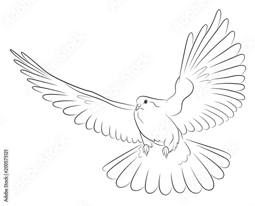 Silhouette Of White Dove The Symbol Of Peace Buy This Stock