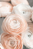 Pink persian buttercup. Bunch pale pink ranunculus flowers light background. Wallpaper, Vertical photo
