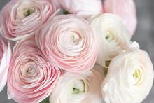 Many Layered Petals. Persian B...