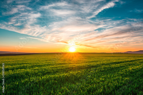 Fotobehang Meloen Spring Landscape with Wheat Field and Clouds