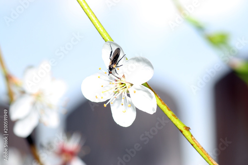 Beetles pollinate flowers since time immemorial Canvas-taulu