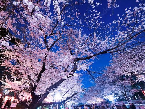 Keuken foto achterwand Kersenbloesem 上野公園の夜桜