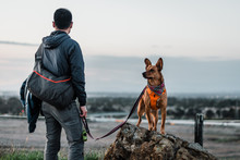 Dog On A Rock