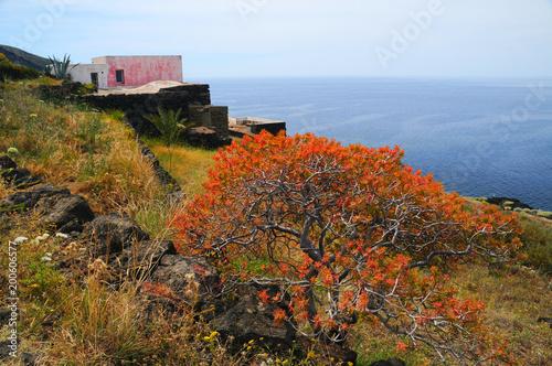 Foto op Plexiglas Bruin イタリア、シチリアのパンテッレリア島の風景