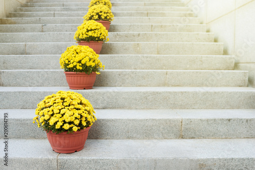 Deurstickers Narcis Yellow flowers in clay pots stand on a stone ladder. Decor of ladder flight. Floristics. Landscaping.