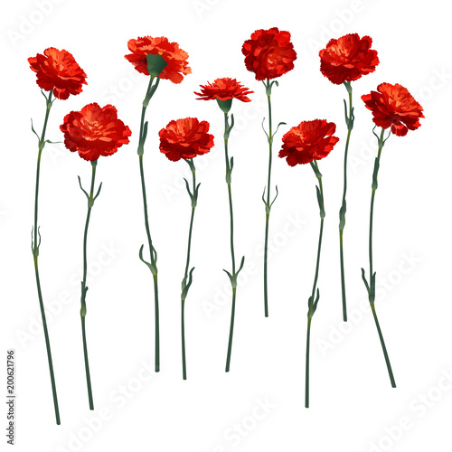 Vector carnations, a set of nine different flowers Canvas Print