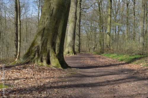 Deurstickers Weg in bos Chemin forêt sentier bois arbre paysage