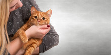 Young Woman Hugging Her Beautiful Redhead Cat.Love To The Animal.