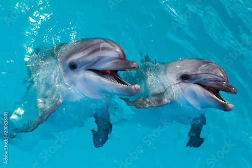 Obraz na plátne Group of cute smart dolphins in the ocean