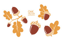 Oak. Branch. Isolated Acorns O...