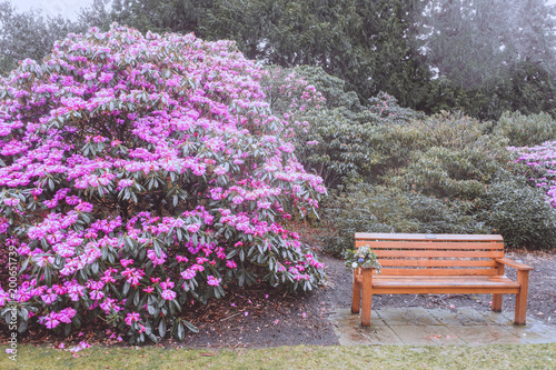 Zdjęcie XXL Królewski Ogród Botaniczny w Edynburgu