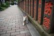 Cat walking the street