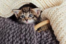 Small  Kitten In The Basket