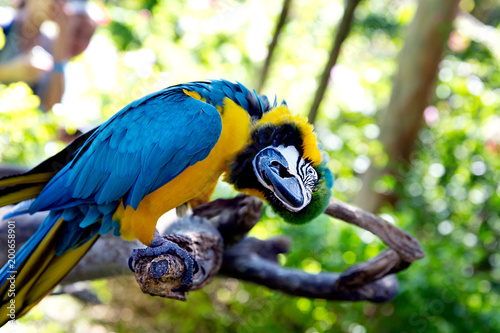 Deurstickers Papegaai Colorful portrait of Amazon parrot against jungle. Side view of wild parrot head on green background. Wildlife and rainforest exotic tropical birds as popular pet breeds