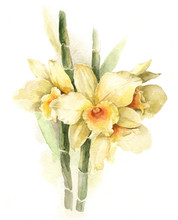 Watercolor Illustration Yellow Orchid