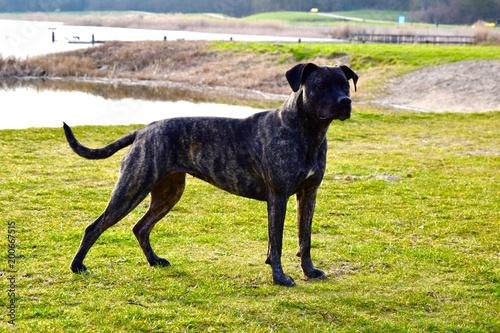 Printed kitchen splashbacks Dog My best friend