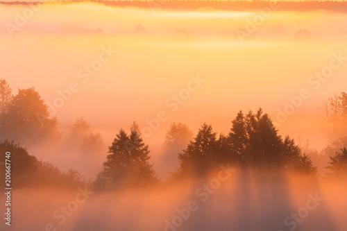 Papiers peints Morning Glory Amazing Sunrise Over Misty Landscape. Scenic View Of Foggy Morning