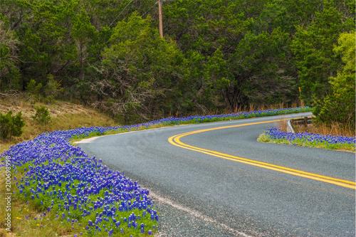Poster Texas Bluebonnet Road