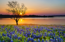 Beautiful Texas Spring Sunset ...