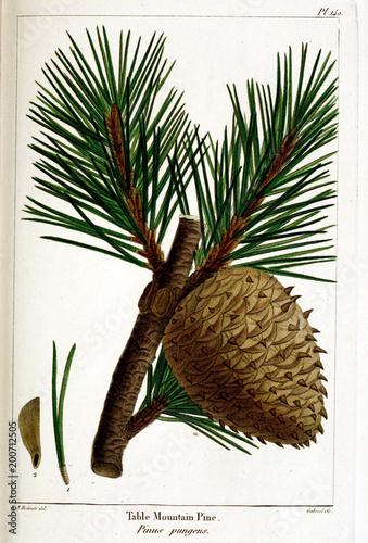 Poster Graphic Prints illustration of Plant