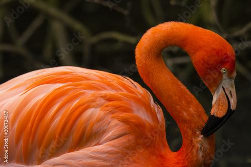 Foto op Aluminium Flamingo Flamingo portrait