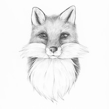 Hand Drawn Fox Isolated On Bac...