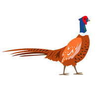 Cartoon Pheasant Icon On White Background.
