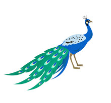 Cartoon Peacock Icon On White ...