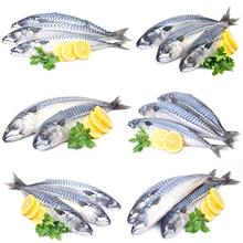 Fish Mackerel