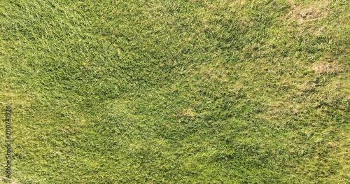 Montage in der Fensternische Gras Perfect grass on the golf field. Background green grass.