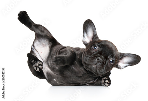 Deurstickers Franse bulldog Dog in yoga pose on a white background