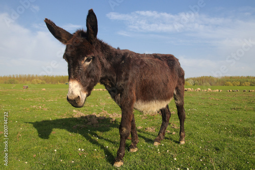 Cute donkey on the floral spring field