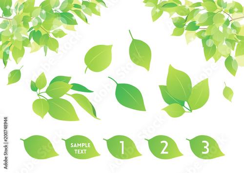 背景素材 植物