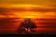 Samotne drzewo na tle wschodzącego słońca i pięknego nieba