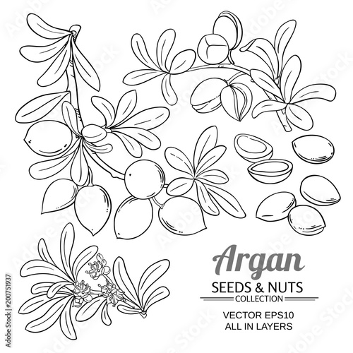 argan branches vector set Canvas Print