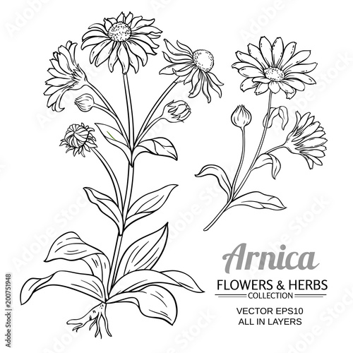 arnica vector set Wallpaper Mural