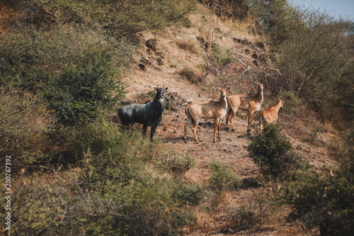 Foto op Aluminium Zalm wild animals on nature in Cyprus