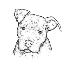 A Pedigreed Dog Or A Puppy. Funny Pit Bull. Vector Illustration.