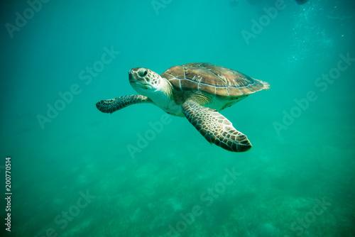 Foto op Aluminium Schildpad turtles in Cancun Mexico