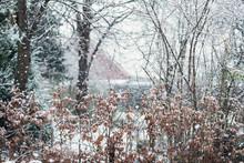 Beech Hedge In Snowy Backyard ...