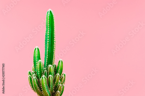Green cactus minimal stillife style against pastel pink background.