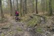 Zerstörung des Waldbodens durch den Einsatz von Grossmaschinen bei der Holzernte