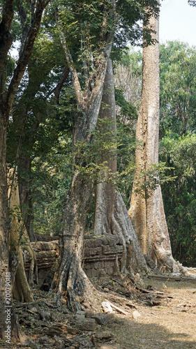 Foto op Aluminium Rudnes ankor wat temple complex