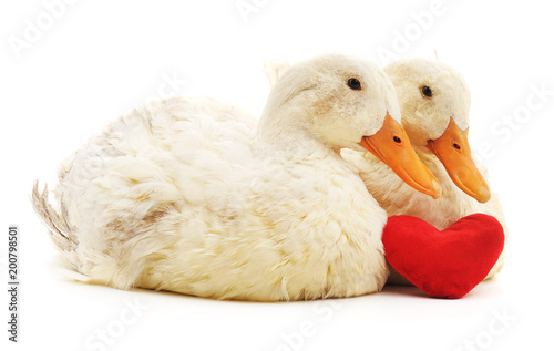 Two white ducks and heart.